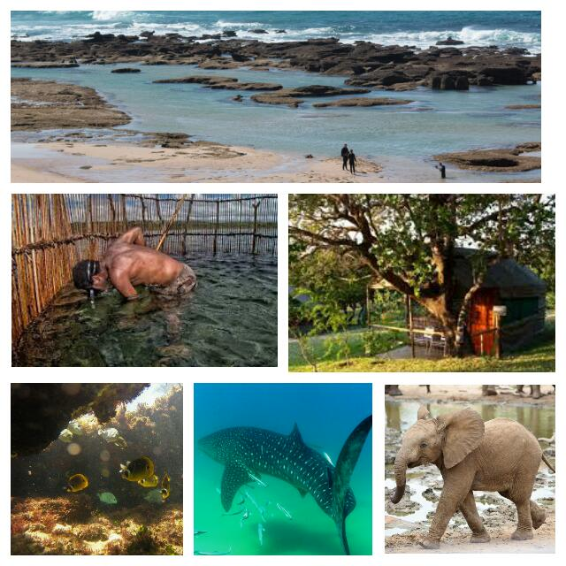 Short Primitive Snorkeling Holiday in South Africa