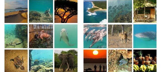 Snorkeling holidays in South Africa