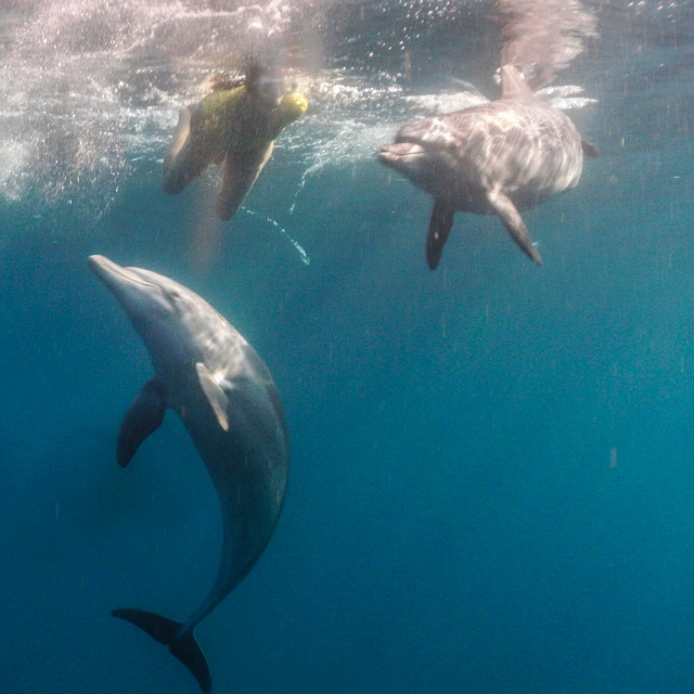 Ocean experience from St Lucia South Africa Activities Things to do