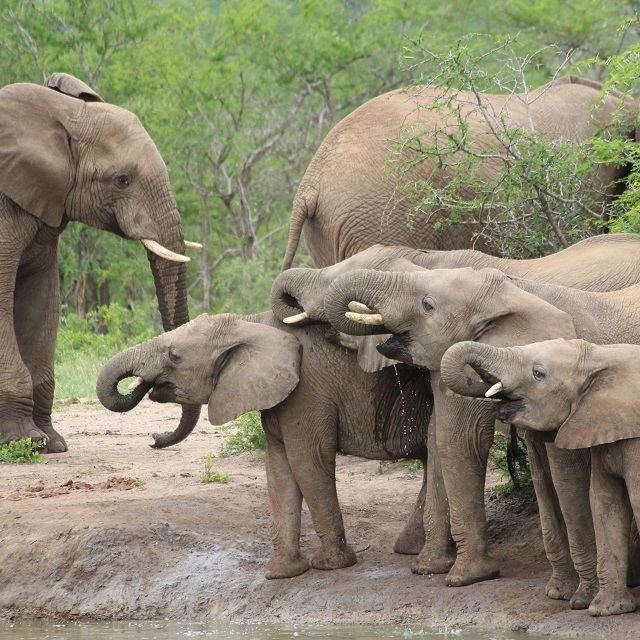 Tembe elephant tours, tuskers, big 5 safari kosi bay