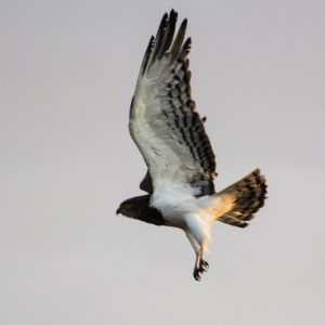 St Lucia south africa birding guides