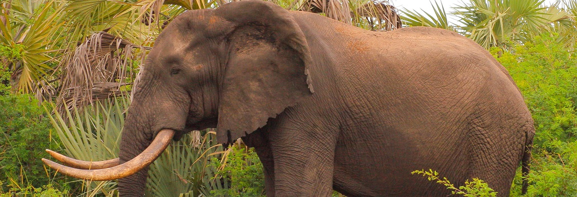 elephant interactions st lucia south africa