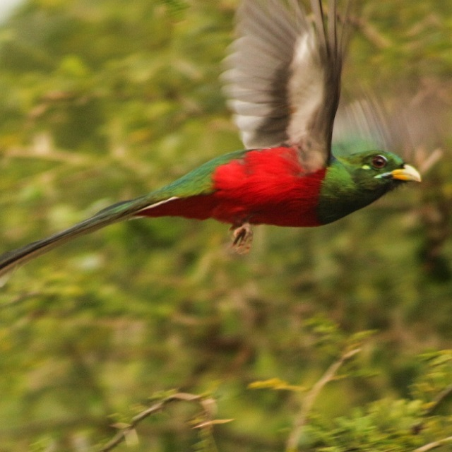 Birding tours in St Lucia, South Africa.