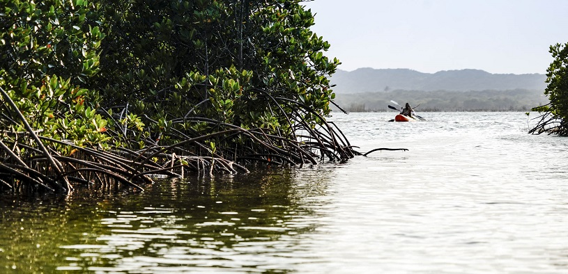 Kayaking among mangroves in kosi bay estuary