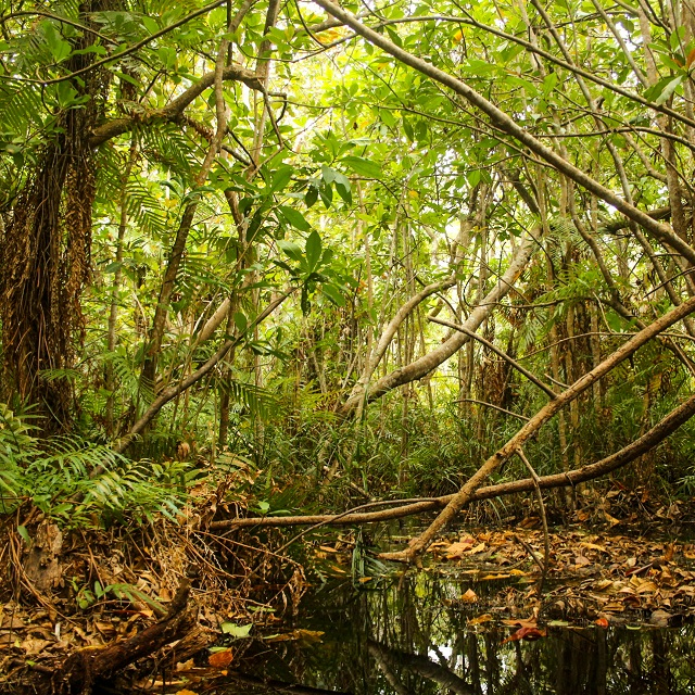 Guided swamp forest trails at Kosi Bay Mouth.