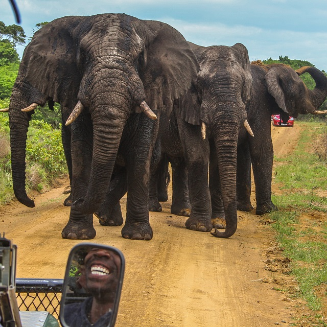 A Full day Safari in iSimangaliso wetland park including a 2 hour Snorkeling Adventure and braai.