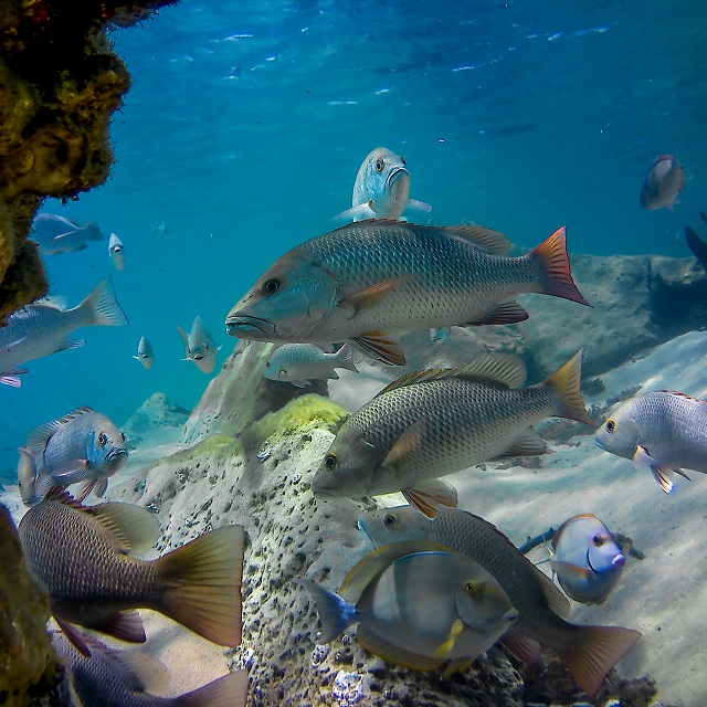 Snorkeling tours at Kosi bay mouth