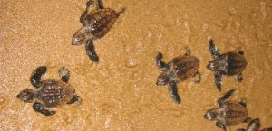 Turtle tour St Lucia south africa