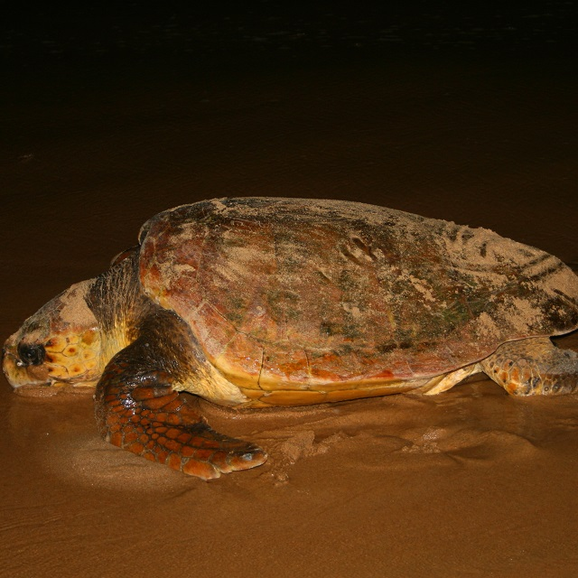 Turtle Tours from St Lucia South Africa
